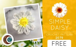 SIMPLE DAISY (2079)